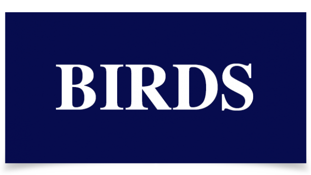 Birds Absinto arthemisia